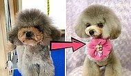 Парикмахер из Японии так преображает собак, что их хозяева с трудом узнают своих питомцев