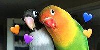 Такие разные, но всё-таки они вместе: История любви двух попугаев, которая покорила интернет