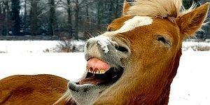Уличенный в надругательстве над лошадью мужчина заявил, что та сама дала свое согласие, подмигнув ему