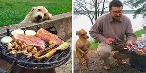 До слез: 32 фото с собаками, когда просто невозможно отказать, если они смотрят на еду
