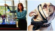 Переводчик для собак и кошек и еще несколько гаджетов из будущего, которые уже здесь!