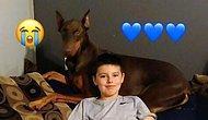 Дружба без границ: 10-летний мальчик продает все свои игрушки, чтобы спасти любимую собаку
