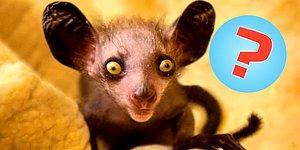 Догадаетесь ли вы, как называется животное всего по одному фото?