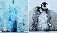 Тест: Сможете ли вы протянуть в одиночку в Антарктиде хотя бы неделю?