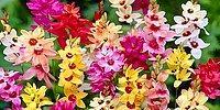 Тест: Хорошо ли вы знаете цветочную мифологию?