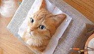 3D-портреты кошек от японского художника, использующего войлок для своих поделок