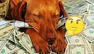 Тест: сможете ли вы с первого раза вычислить самую дорогую породу собак?