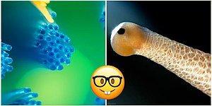 Тест: Получится ли у вас угадать, что изображено на этих картинках?