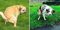 Тайна раскрыта: почему собаки смотрят на вас, когда ходят по-большому
