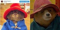 В Instagram появился померанский шпиц, который выглядит как медведь Паддингтон. Что может быть милее?