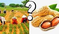 Тест: А вам под силу угадать, как растут эти продукты питания?