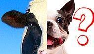 Тест: Каждый из нас - микс двух животных: А какой же вы?