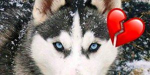 Тест: Выберите сердцем животное, а мы расскажем, где вам искать свою вторую половинку