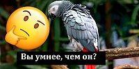 Умнее ли вы попугая? Тест, который поможет выяснить это