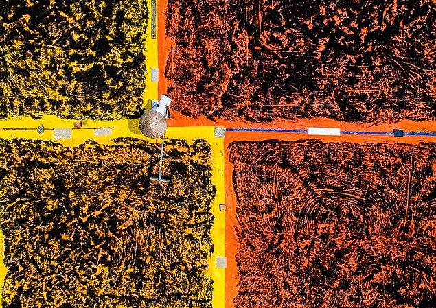 11. Biber tanelerini kurutmak, Vietnam