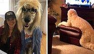 Мохнатые конспираторы: Собаки, которые чертовски хорошо притворяются людьми
