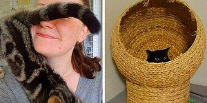 Девушка, работающая в приюте для котов, рассказывает о трудностях своих будней и мурлыкающих коллегах