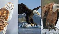 Тест: Какая хищная птица – ваш тотем?