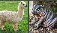 Тест: Знаете ли вы названия детенышей животных?