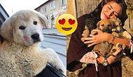 Dünya Böyle İnsanların Hatrına Dönüyor! Sokak Hayvanlarını Mutlu Etmeyi Kendine Hayat Felsefesi Edinen Güzel Yürekli Kadın
