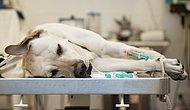 Ветеринар рассказал душераздирающую правду о том, что делают все животные, прежде чем их усыпляют