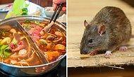 Беременная нашла мертвую крысу в своем супе. Ресторан в ответ предложил ей деньги на аборт