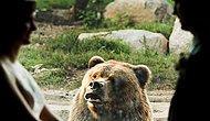 Весь Интернет в восторге от реакции русского медведя на фотосессию новобрачных