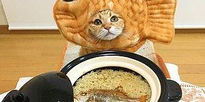 Ты - это то, что ты ешь: забавные котейки из корейского инстаграма, которые точно сделают твой день