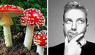 Тест: Только редкие представители современного поколения смогут отличить съедобные грибы от несъедобных