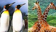 Тест: Как много вы знаете о животном мире?