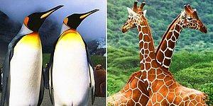 Тест: Как много вы знаеет о животном мире?