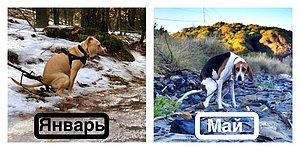 Календарь на 2019 с изображениями какающих собак станет самым запоминающимся подарком, который вы презентуете в этом году!