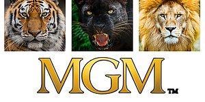 Тест: сможете вспомнить, каких животных не хватает на этих логотипах?