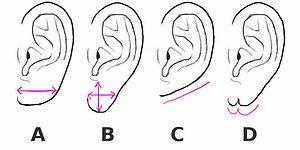 Тест: Найдите форму мочки вашего уха, а мы расскажем, как вы ведете себя в отношениях