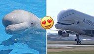 А вы уже видели новый самолет, который выглядит как огромный летающий кит?