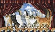 Тест для абсолютных кошатников: Что вы знаете о кошачьей географии?