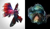 Летающие рыбы, или Волшебный мир аквариумов глазами тайского фотографа
