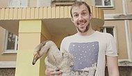 Андрей и Харвистер: белорус вывел из яйца гуся и теперь снимает о нем YouTube-сериал