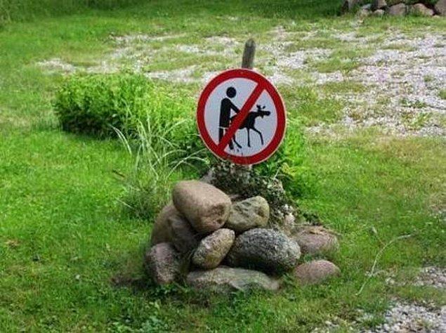 8. Hollanda 2010 yılında bestialiteyi (hayvanlarla cinsel ilişki), kanun kapsamına alarak yasakladı.