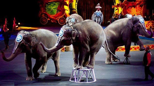 10. Bulgaristan'da sirklerde gösteri amaçlı yabani hayvanların kullanılması yasak.
