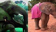 Оказывается, слоны относятся к людям словно к щенкам