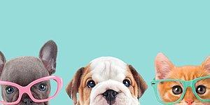 Тест: Какое домашнее животное - ваше подсознание?