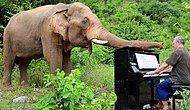 Забыть все плохое: британец играет на пианино, чтобы вылечить слонов с травмами
