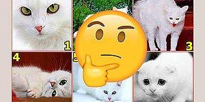 Тест: То, какую кошку вы выберите, расскажет о вашем истинном состоянии сейчас