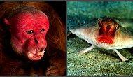 Самые непривлекательные создания планеты Земля