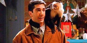 Тест😻: Какое животное станет лучшим другом для вас?