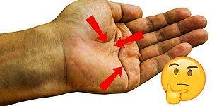 Хиромантический тест: Линии на руке расскажут, что ждёт вас в будущем