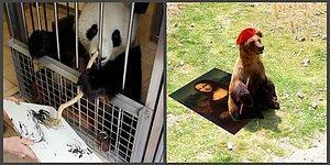 Когда панда, свинья и мишка зарабатывают больше тебя, или Новые художники в мире живописи