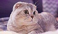 Чем занимаются кошки втайне от всех, когда остаются одни дома