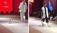 Во время модного показа в Стамбуле все внимание гостей было приковано к кошке, забравшейся на подиум